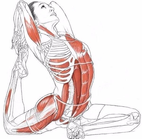 Как сделать свои мышцы эластичнее 144